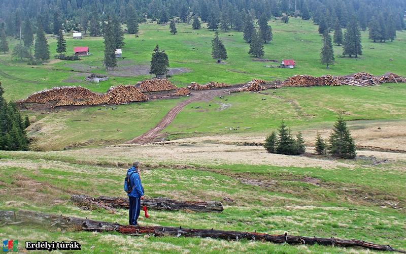 A Pádis fennsík is védett terület, de sajnos elképesztő mértékben irtják az erdőket!